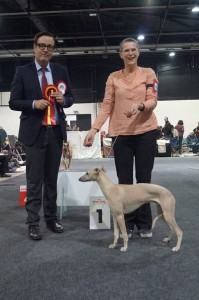 Daley 'Beste Pup in Offenburg'