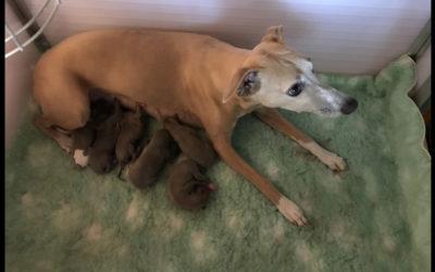 Lisa en Herman's pups